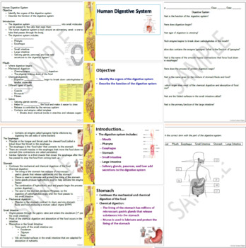 Digestive System Packet: PowerPoint, Student Notes, Worksheet , TWO Activties