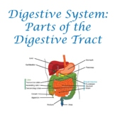 Digestive System:  Parts of the Digestive Tract