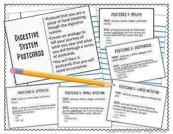 Digestive System Postcard Project