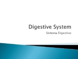 Digestive System Power Point  With Vocabulary in English a