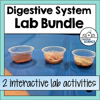 Digestive System Lab Activity