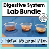 Human Digestive System Activities - Digestive System Stations