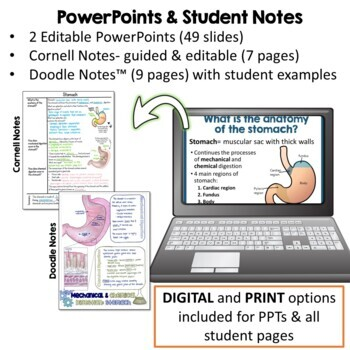 Digestive System- PowerPoint, Notes, Diagrams, & Lab Activity