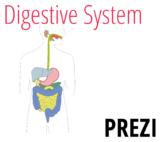 Digestive System Prezi
