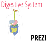 Digestive System (Grades 6 to 12)