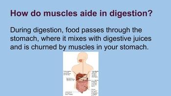 Digestive System Presentation, Notes, & Lab