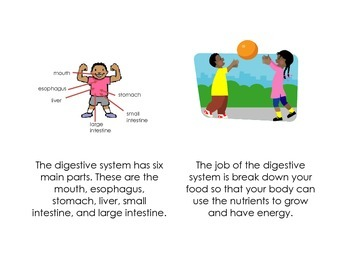 Digestive System Printable Book