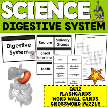 Digestive System- Quiz,  Flashcards, and Crossword Puzzle