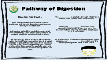 Digestive System Reading Comprehension