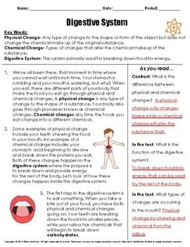 Digestive System Reading Passage