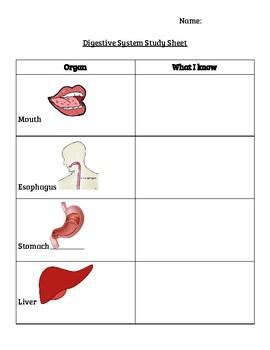 Digestive System Sheet