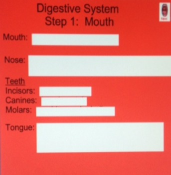 Digestive System Smart Board Lesson