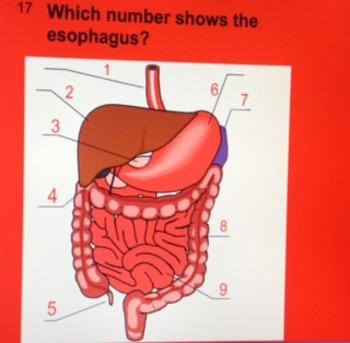 Digestive System Smart Response Quiz for Smart Board