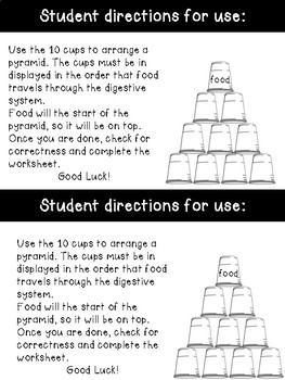 Digestive System Stacking Cups