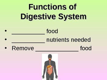 Digestive System Student Fill-in Notes