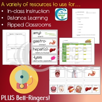 Digestive System Supplements for Instruction and Assessment