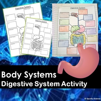 Digestive System System Research or Notes Outline