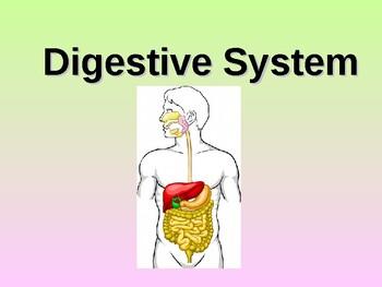 Digestive System Teacher Notes