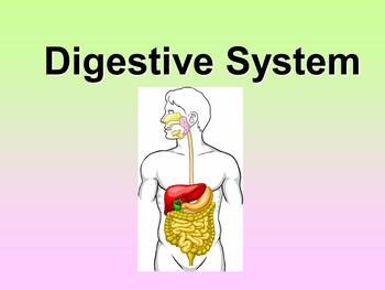 Digestive System Teacher and Student Fill-in Notes