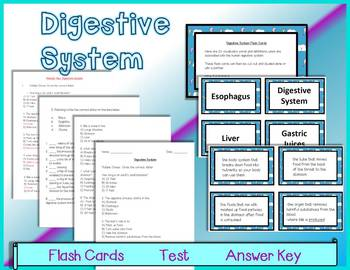 Digestive System - Flash Cards, Test and Answer Key