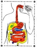 Digestive System Tour