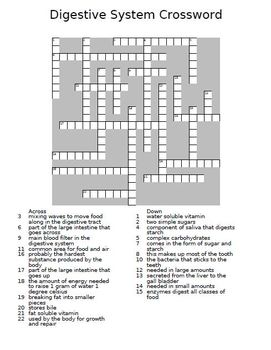 digestive system crossword puzzle by the teacher team tpt. Black Bedroom Furniture Sets. Home Design Ideas