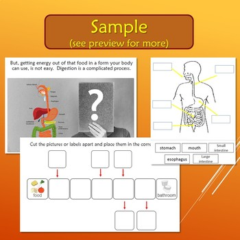 Digestive System Unit for Special Education