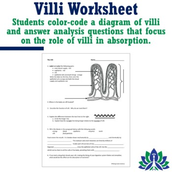 Human Body Systems Digestive System - Villi Worksheet NGSS MS-LS1-3