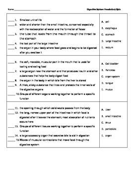 Digestive System Vocabulary Quizzes