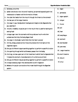 Digestive System Vocabulary Quizzes by Seriously Science ...