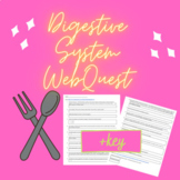 Digestive System WebQuest- WITH key