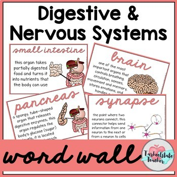 Digestive System Word Wall | Nervous System Word Wall