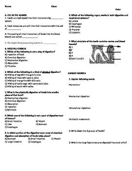 Digestive System Worksheet 1