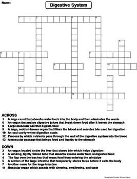 digestive system worksheet crossword puzzle by science spot tpt. Black Bedroom Furniture Sets. Home Design Ideas