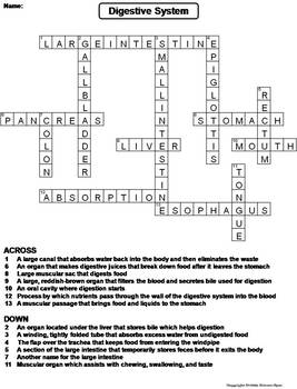 Digestive System Worksheet/ Crossword Puzzle