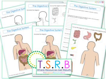 Digestive System Worksheets