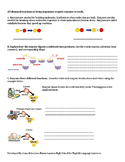 Digestive System and Enzymes (Living Environment / ESL)