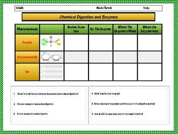 Digestive System and Enzymes Worksheet