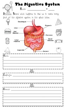 """Digestive System recording page (8"""" x 14"""")"""