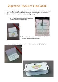 Digestive System flap book