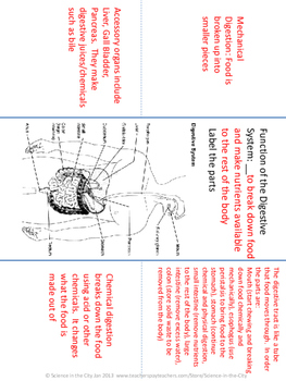 Digestive and Excretory System Foldaway Notes