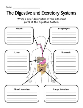 Digestive and Excretory System - Journal