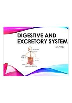 Digestive and Excretory System Lesson, Activity, Worksheet/Homework
