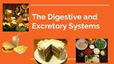 Anatomy: Digestive and Excretory Systems PPT- Editable!