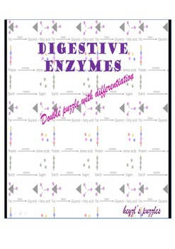 Digestive enzymes double puzzle worksheet with differentiation