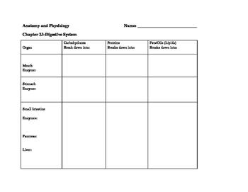 Digestive molecules chart