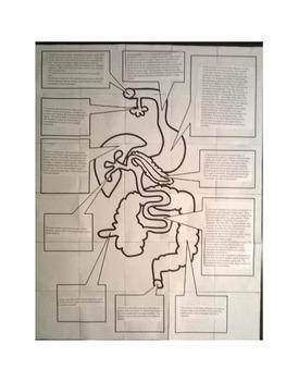 Digestive system bulletin board