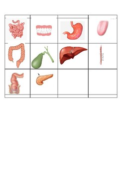 Digestive system organs and their functions cut and paste