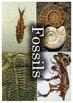Digging for Fossils Activity - Preschool Paleontologist!