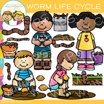 Worm Life Cycle Clip Art